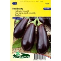 Aubergine zaden Black Beauty