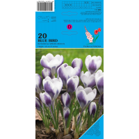 Crocus Blue Bird 20 bollen