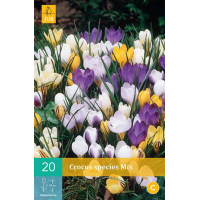 Crocus species mix 20 bollen