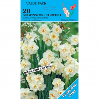Narcis Sir winston Churchill 20 stuks