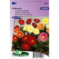 Gerbera jamesonii Choice mix