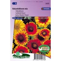 Gaillardia aristata Choice dekenbloem mix