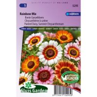 Chrysanthemum zaden Rainbow mix Margriet