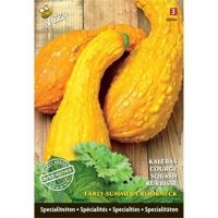 Specialties Squash Early Summer