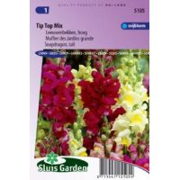 Antirrhinum majus maximum Tip Top mix