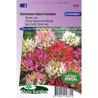 Cleome spinosa Colour Fountain mix Kattensnor