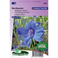 Delphinium grandiflorum Blue Diamonds ridderspoor