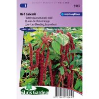 Amaranthus caudatus Red Cascade Kattenstaart zaden