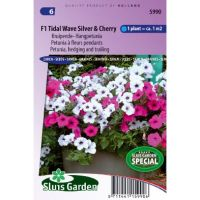 Petunia zaden F1 Tidal Wave silver & Cherry red