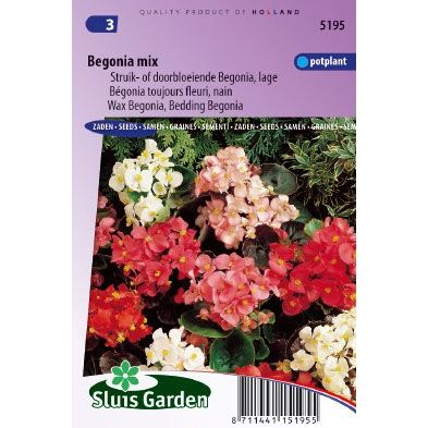 Begonia semperflorens choice mix