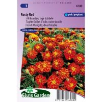 Afrikaan zaden Tagetes patula rusty red