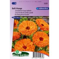 Calendula officinalis Balls Orange goudsbloem
