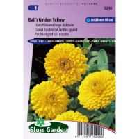 Calendula officinalis balls yellow goudsbloem